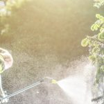 Pesticide Garden Plants Spraying With Professional Equipment By