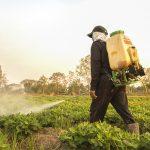 farmer spraying pesticide during the day time