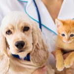 Vet Examining Dog And Cat. Puppy And Kitten At Veterinarian Doct